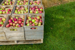 Organic apples in boxes