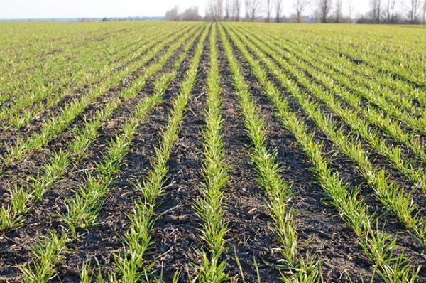Winter crop report