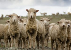 National Sheep Health Monitoring Project