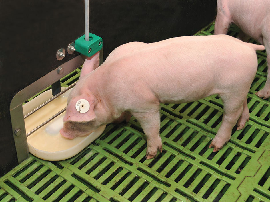 Pork production set to surge in 2021